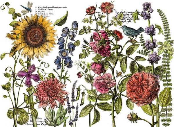 "Decor Transfer ""Botanist's Journal"" - Iron Orchid Designs ((IOD)"