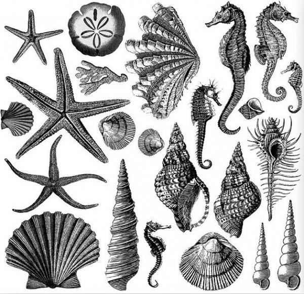 "Decor Stempel ""Seashore"" - 2 Bögen - Iron Orchid Designs (IOD)"