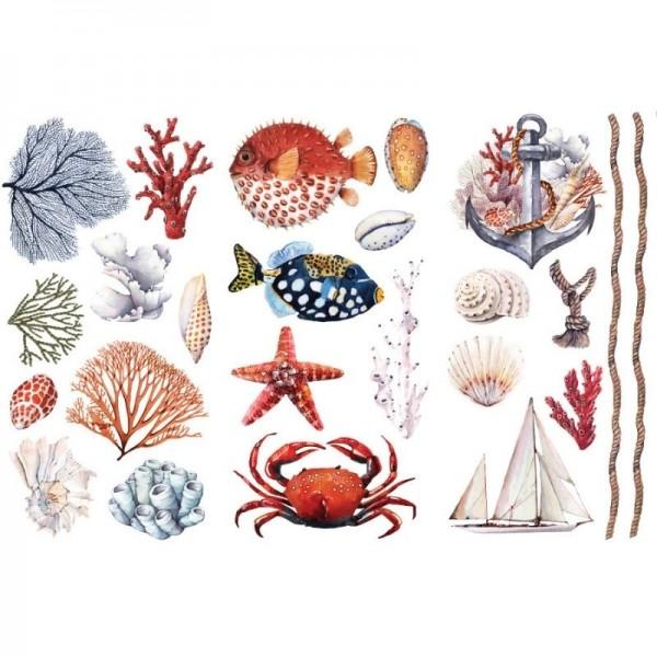Transfers Amazing Sea Life 3-tlg. á 15,24 x 30,43 cm von ReDesign
