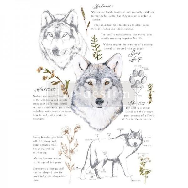 """Transfer """"Gray Wolf"""" 60,96 x 88,9 cm von Redesign"""