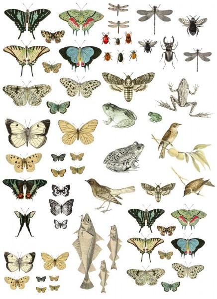 "Decor Transfer ""Entomology Etcetera"" - Iron Orchid Designs (IOD)"