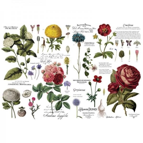 """Transfer """"Vintage Botanical"""" 88,9 x 121,92 cm von Redesign"""