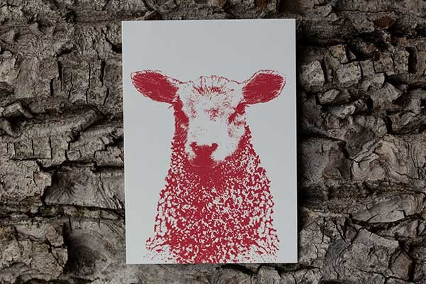Postkarte mit Schafmotiv