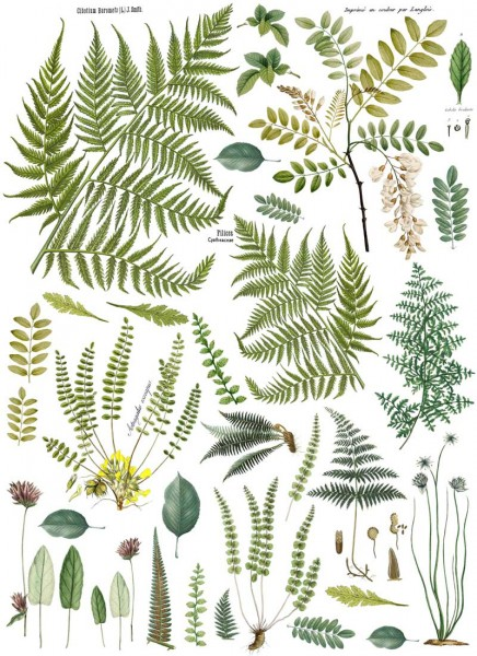 "Decor Transfer ""Fronds Botanical "" - Iron Orchid Designs (IOD)"
