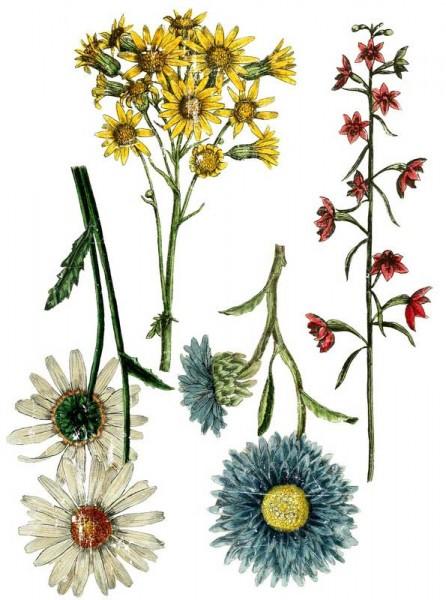 """Decor Transfer """"Wildflower Botanicals"""" - Iron Orchid Designs (IOD)"""