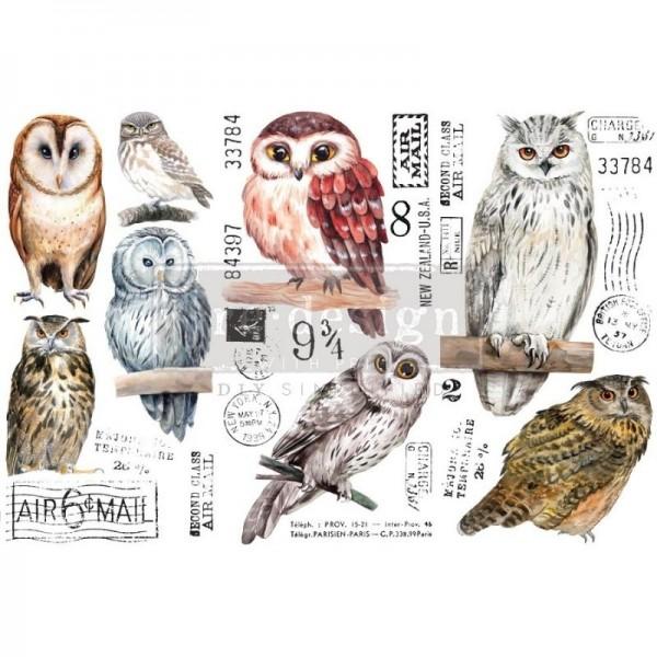 Transfers Owl - 3-teilig á 15,24 x 30,43 cm von ReDesign